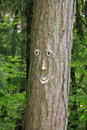 Free Tree Face Stock Images - 20725074