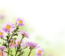 Free Flower Background Royalty Free Stock Photos - 20720138