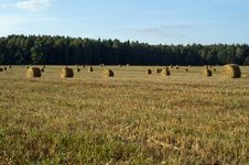 Free Round Hay Bales On A Field Stock Images - 20720444