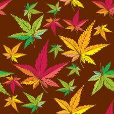 Free Autumn Leaf Pattern Stock Photos - 20720453