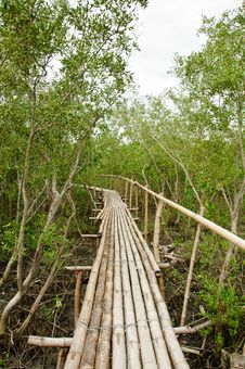 Free Bamboo Walkway In Mangrove Forest Stock Photos - 20721283