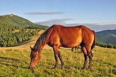 Free Horse On A Summer Mountain Pasture Stock Image - 20721671