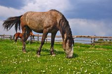 Free Horse On A Summer Pasture Stock Image - 20721751
