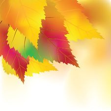 Free Colorful Autumn Background Royalty Free Stock Photography - 20721977