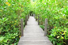 Wooden Bridge Go To Mangrove Forest Royalty Free Stock Photo