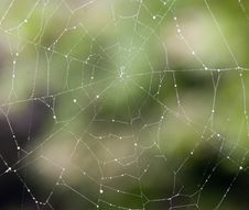 Free Spiderweb With Dew Droplets Royalty Free Stock Image - 20722516