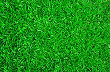 Free Carpet Grass Royalty Free Stock Photography - 20722517