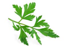 Free Parsley Stock Images - 20723394