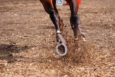 Free Competitions On Concours - The Horse Skips On A Fi Royalty Free Stock Photos - 20725018