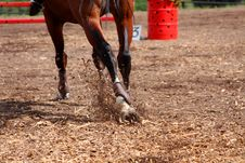 Free Competitions On Concours - The Horse Skips On A Fi Stock Photo - 20725050