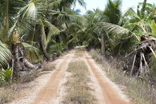 The Rural Roads Are Filled With Trees Royalty Free Stock Images
