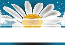 Free Daisy Background Stock Image - 20726681