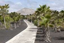 Free Tropical Garden In Lanzarote Royalty Free Stock Photography - 20728417