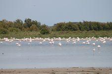 Free Flamingos, Camargue, France Royalty Free Stock Photo - 20728605