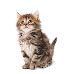 Free Cute Kitten Stock Photos - 20729303