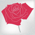 Free Vector Rose Card Royalty Free Stock Photography - 20739667