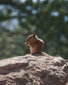 Free Chipmunk Sitting On A Rock Stock Photography - 20730082