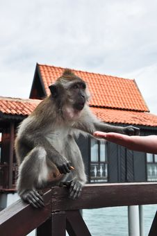 Free Feeding A Monkey Royalty Free Stock Image - 20731316