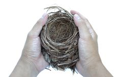 Free Hold Nest Stock Photography - 20732232