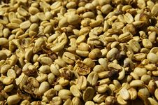Free Dried Coffee Beans Stock Photography - 20733072
