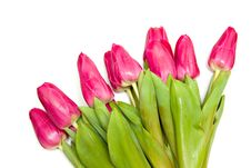 Free Spring Tulips Royalty Free Stock Image - 20733176