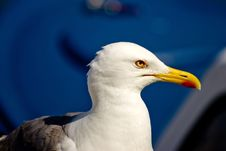 Free Gull Posing Stock Images - 20733914