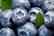 Free Blueberries With Leaves Stock Photography - 20734262