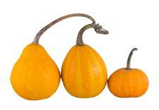Free Three Yellow Pumpkins Royalty Free Stock Photo - 20736275