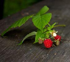 Free Wild Raspberry Branch Stock Image - 20736401