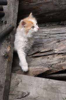 Free Rural Kitten Stock Image - 20737971