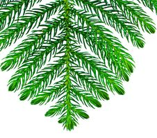 Free Pine Branches Isolated Stock Image - 20738001