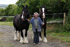 Free Gentle Giants Royalty Free Stock Photography - 20739897