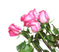 Free Pink Roses Bouquet Royalty Free Stock Photography - 20744187
