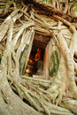 Free Root Of The Tree Absorbing The Ruins Of The Temple Royalty Free Stock Image - 20746216