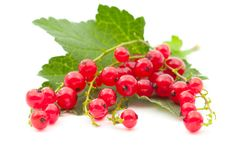 Free Red Currants Royalty Free Stock Photos - 20740468