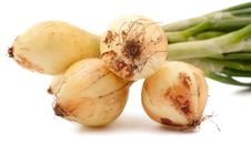 Free Onion Royalty Free Stock Image - 20740556