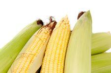 Free Maize Stock Image - 20741131