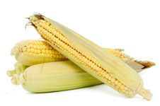 Free Fresh Corn Stock Images - 20741244