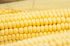 Free Corn Royalty Free Stock Photography - 20741327