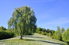 Free Large Lawn With Trees And Flowers Stock Photo - 20741750