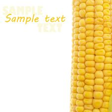 Free Yellow Corn On White Royalty Free Stock Photography - 20742237