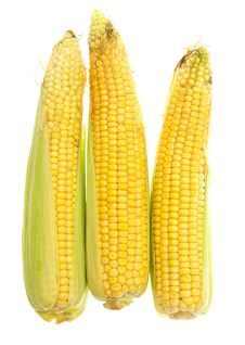 Free Three Yellow Corn Cob On A White Stock Photos - 20742253