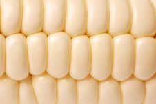 Free Corn Macro Texture Royalty Free Stock Images - 20742629