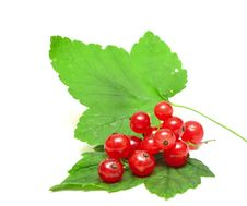 Free Red Currant Close Up Royalty Free Stock Photography - 20743087
