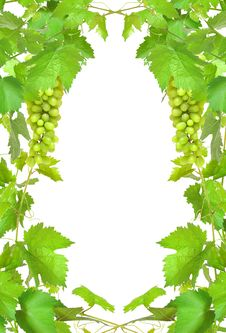 Free Border Of Fresh Grapevine Royalty Free Stock Images - 20743739