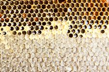 Free Honeycomb Stock Image - 20744701