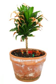Free Houseplant Royalty Free Stock Photo - 20744895