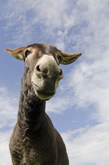 Free Jackass Or Donkey Stock Images - 20745344