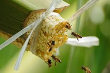 Free Bees Take Nectar From The Palm Tree Stock Images - 20745744