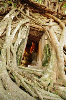 Root Of The Tree Absorbing The Ruins Of The Temple Royalty Free Stock Image